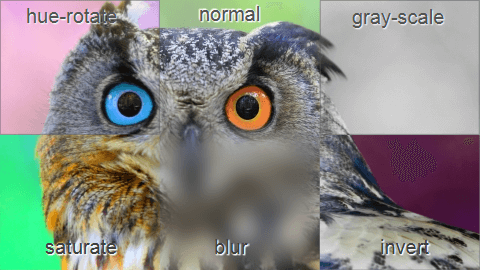 フィルター使用画像